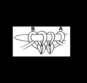 Backward Loop increase